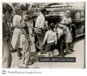 Rabies investigation